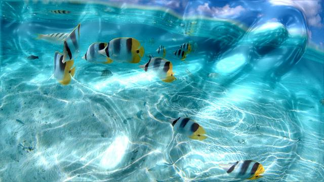 Download Watery Desktop 3D Screensaver