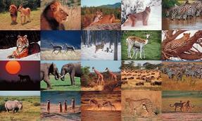 Download Wildlife Photo Screensaver